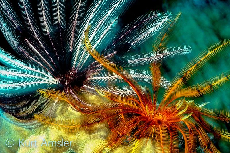 ReefArt__69.jpg